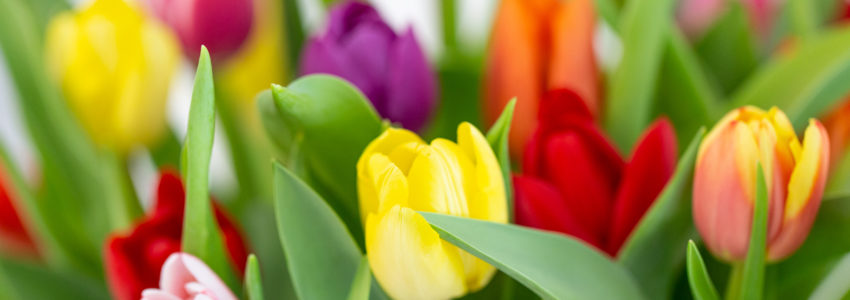 ästhetische Blumen